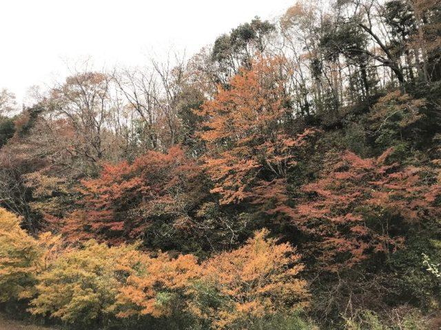 筒森もみじ谷の紅葉