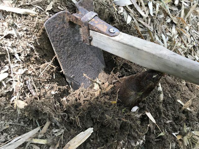 タケノコの掘り方