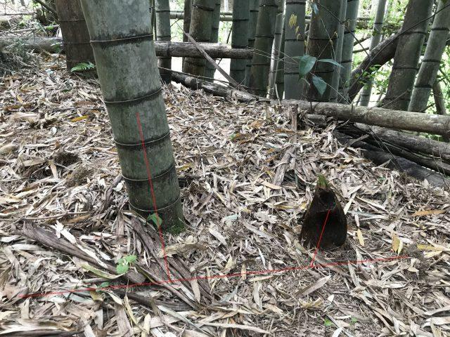 タケノコの土の中