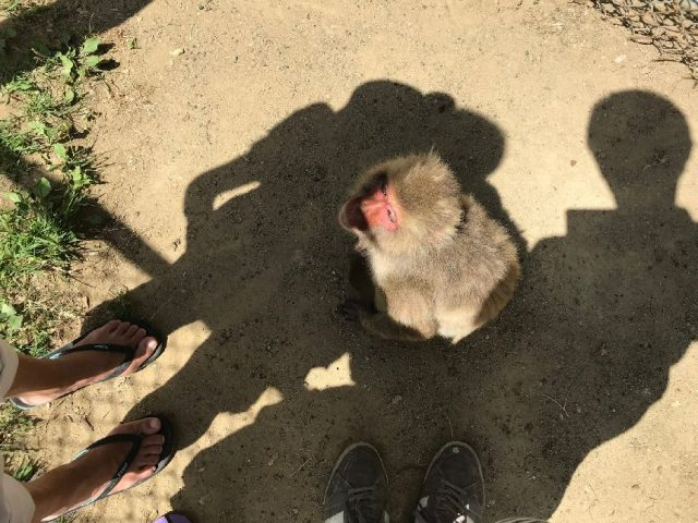 高宕山自然動物園