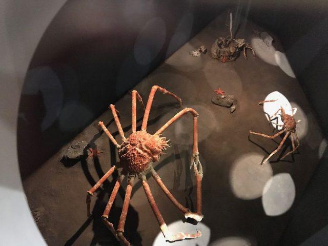 勝浦の海の博物館