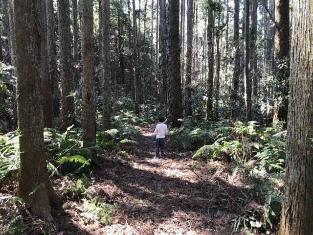 やすらぎの森